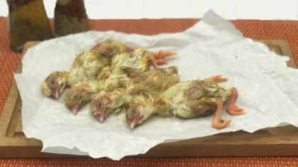 Цыплёнок суточный